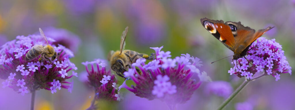 Bees and Butterflies Pollinating Flowers